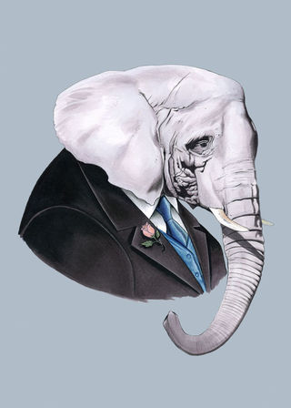 Elephant5x7